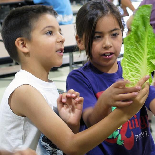 Summer Prog- Holding Lettuce Crop2
